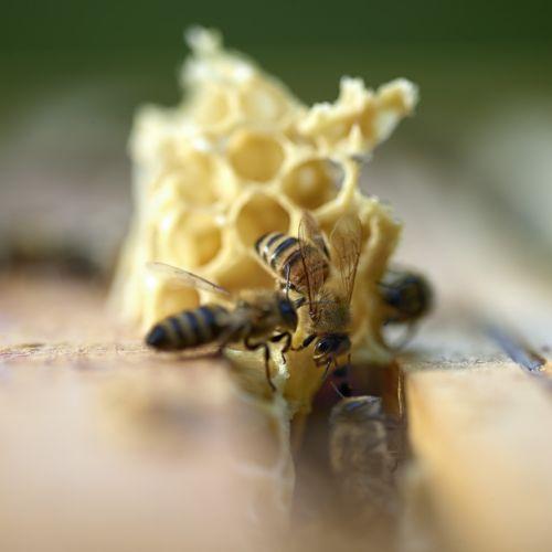 Relation entre abeilles