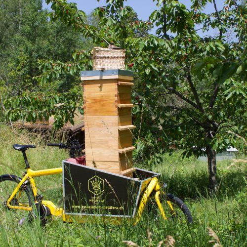 Transport de la récolte de miel