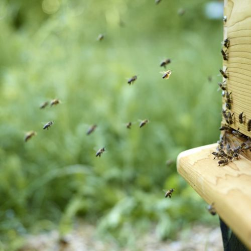 """Les abeilles """"battent le rappel"""""""