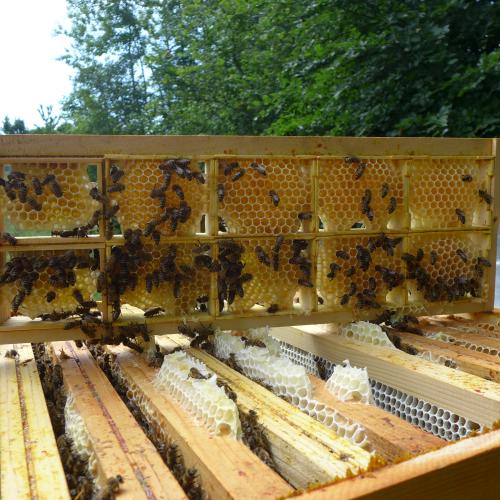 Du miel en brèche